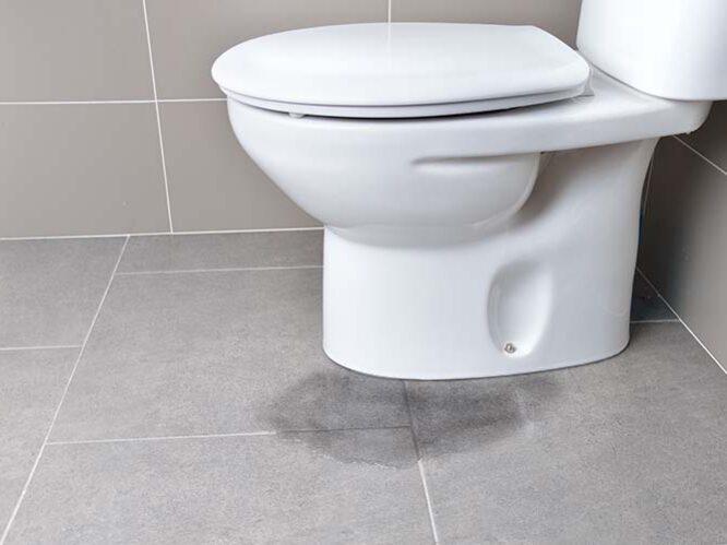 leaking toilet due to blockage Buderim plumber